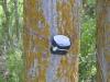 дерево Camino Frances
