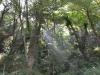 Камино Сантьяго Галисия лес